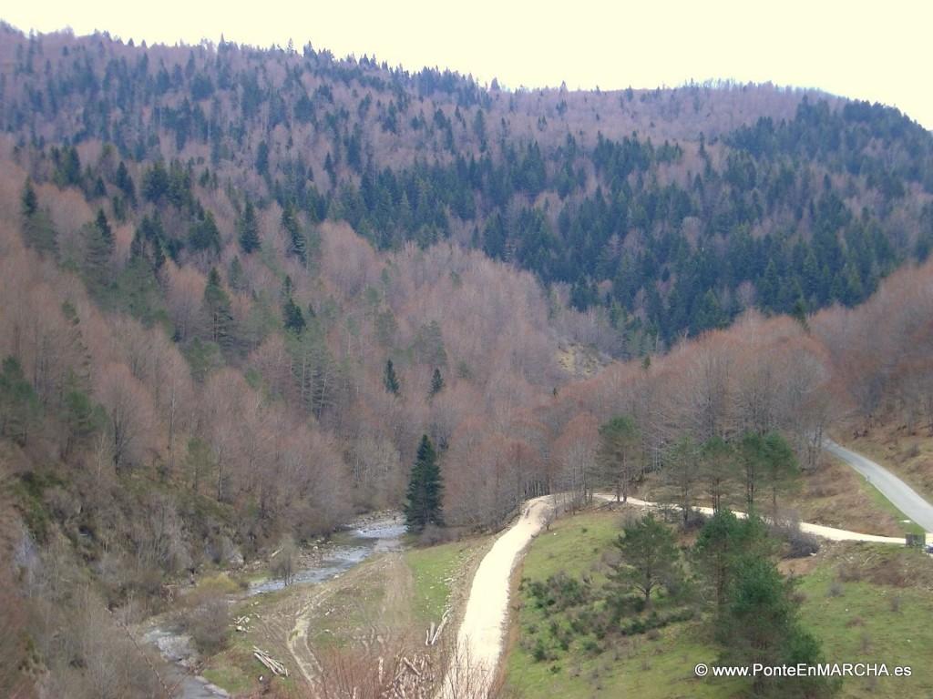 irati bosque II